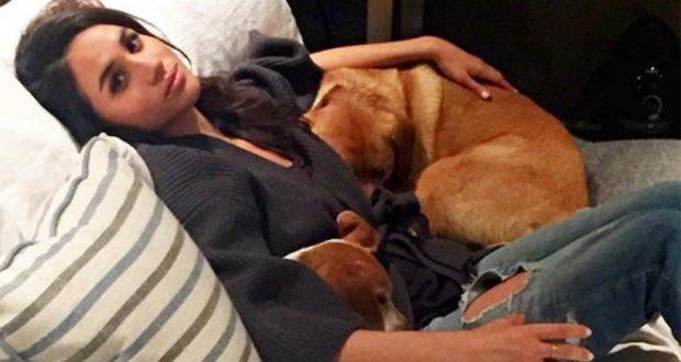 Меган Маркл и одна из двух ее собак