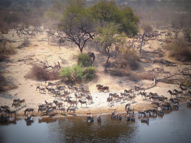 Лагерь заявлен как уникальный опыт Африканской дикой природы (изображения: Booking.com)