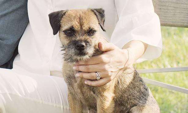собака принца Карла Филиппа и принцессы Софии Сири