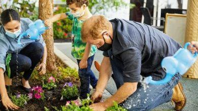 Photo of Вместо незабудок, петунии: Гарри и Меган посадили цветы в память о принцессе Диане